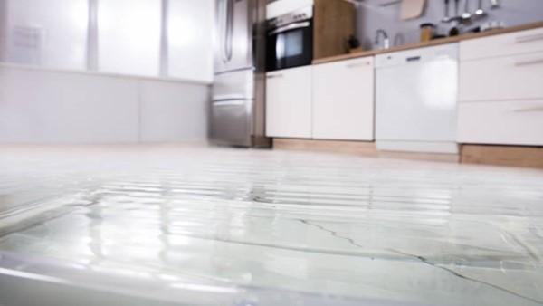 Fungal Growth on Carpets | Origin Dehumidifier